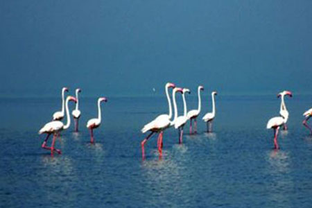 Golden Triangle with Chilika Lake Tours