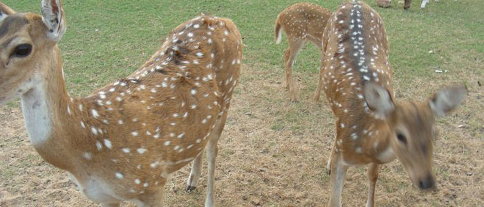 cuttack-deer-park