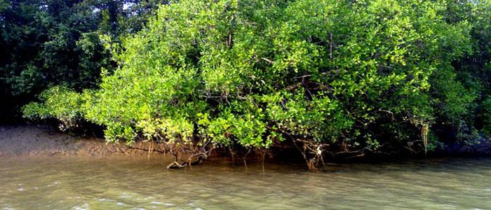 bhitarkanika-mangroves