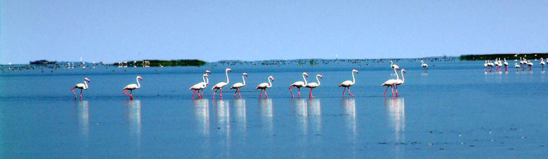 golden-triangle-with-chilika-lake-tours