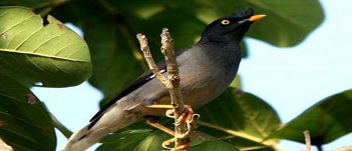 kotagarh-wildlife-sanctuary