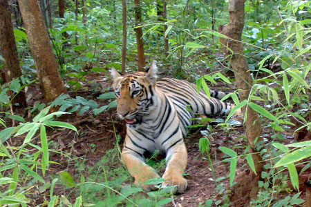 odisha-wildlife-tour